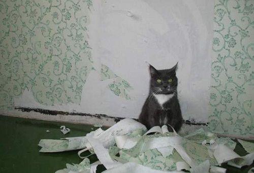 Что делать, когда кошка дёрт обои и мебель