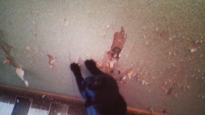 Спасти обои и диван: что делать, если кошка дерёт их